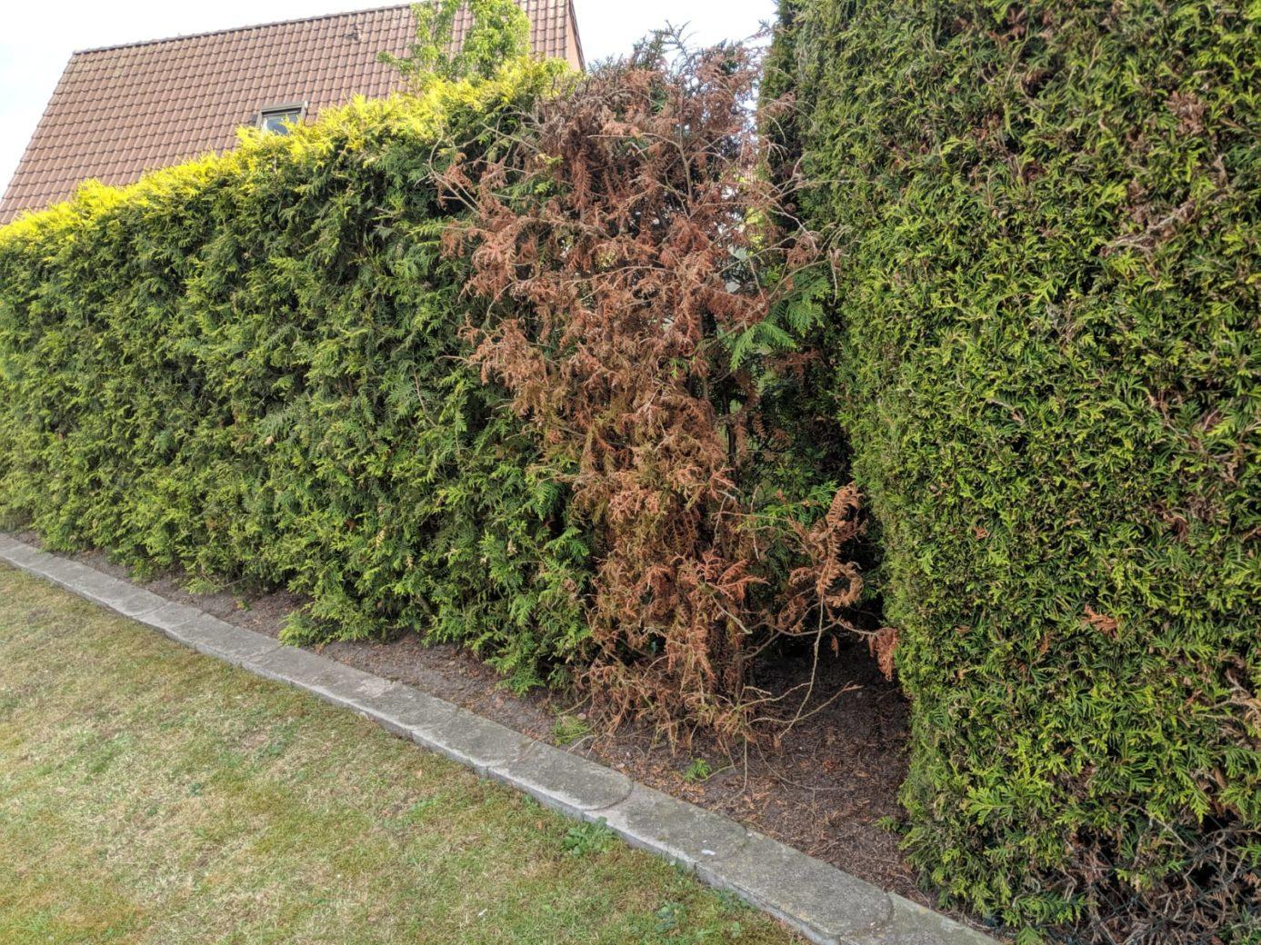 Vegetative Leak Detection
